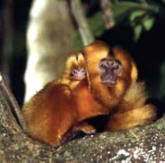 4 ano b animais em extinção
